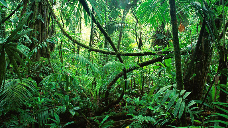 Jungle_Congo_800